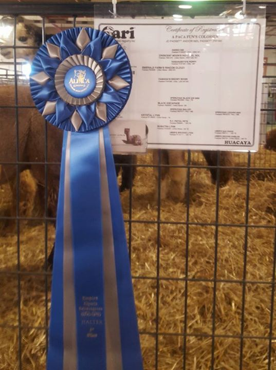 Award Winning Alpacas
