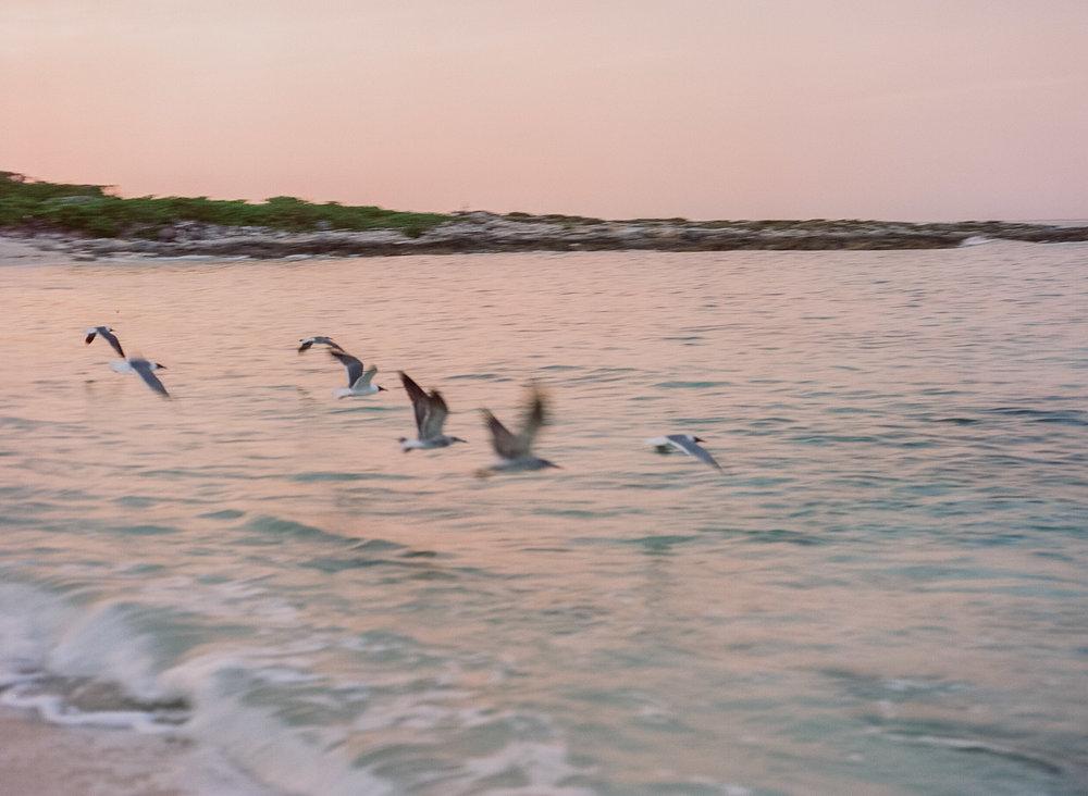 bahamas_film-24.jpg