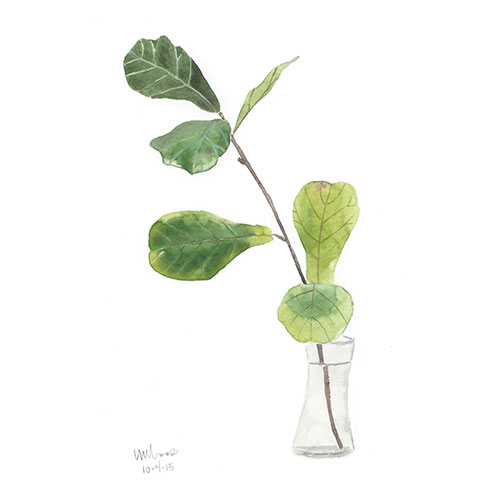 fiddle leaf clipping / monica loos