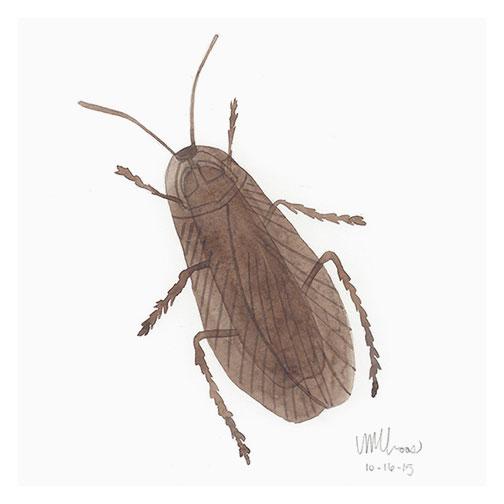 plastic cockroach | monica loos