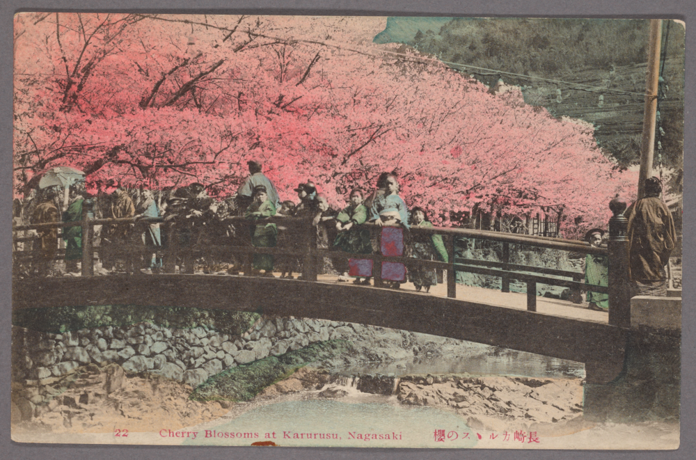 """Cherry blossoms at Karurusu, Nagasaki."" From the New York Public Library Digital Collections."