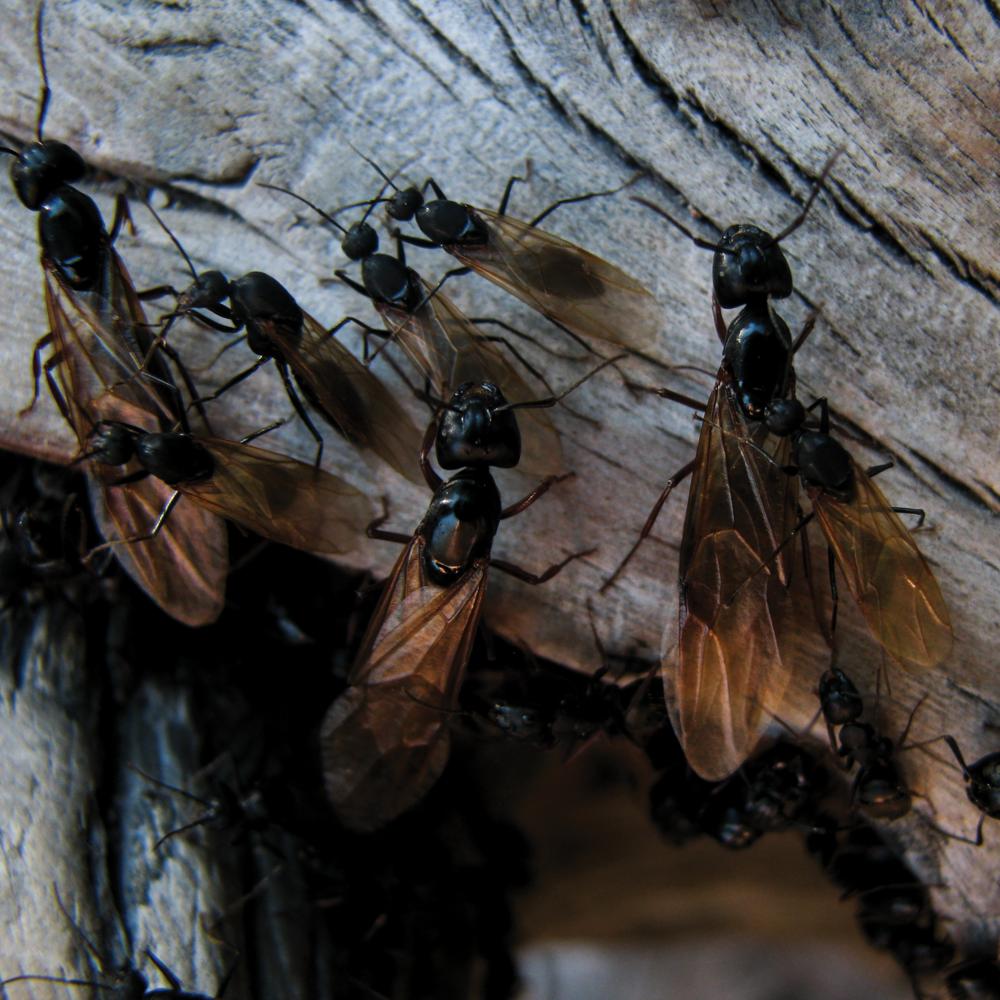 Ants Close [RGB 3000 TL029].png