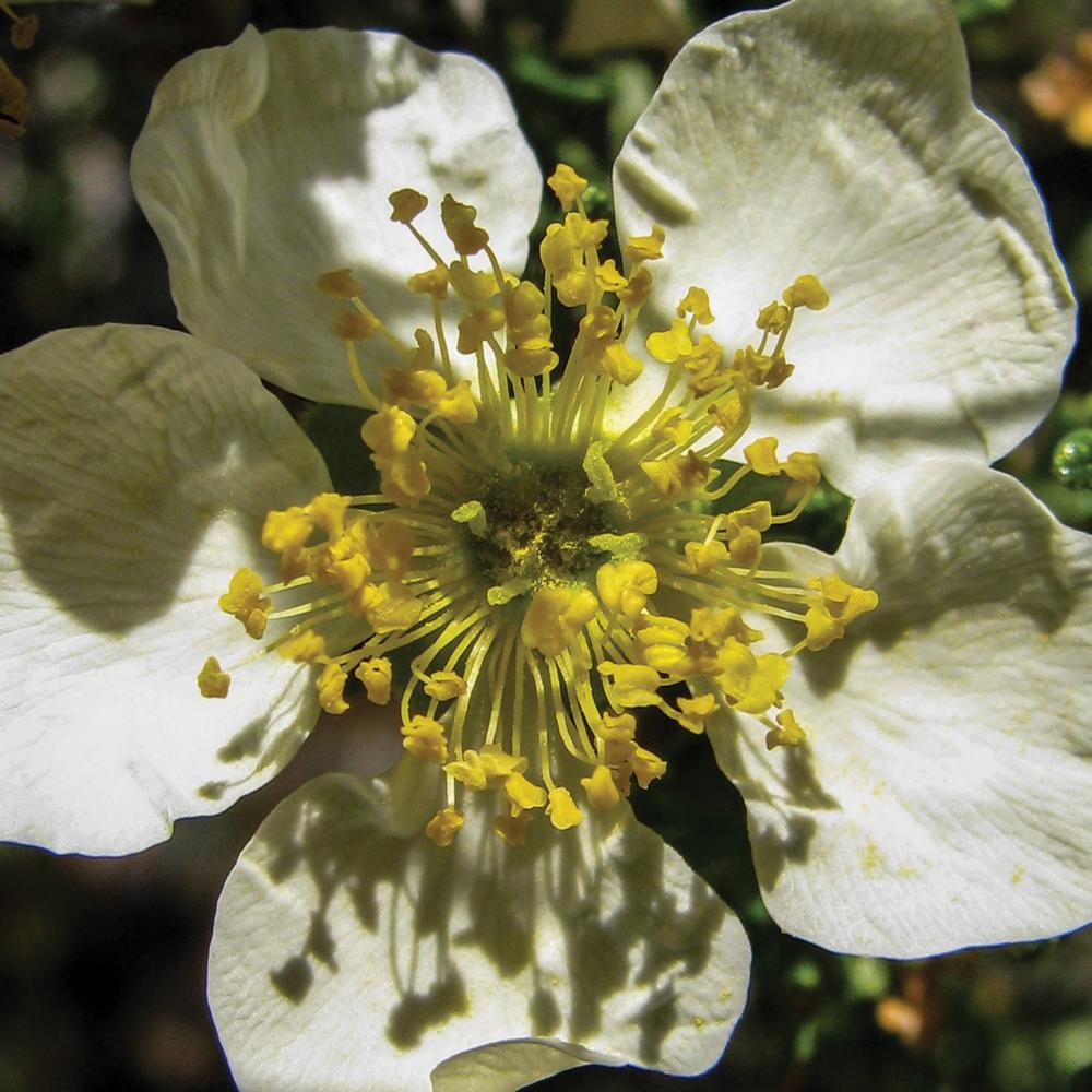 Bryce Flower [RGB 3000 TL013].png
