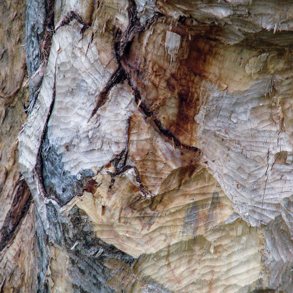 Flood wood 1 [RGB 3000 TL019].png