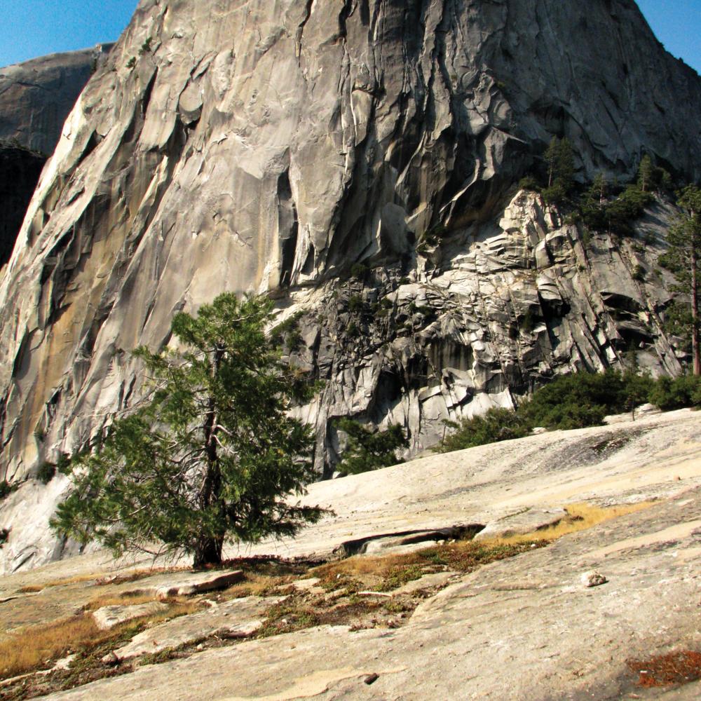 tree rock [RGB 3000 TL031 CS098].png