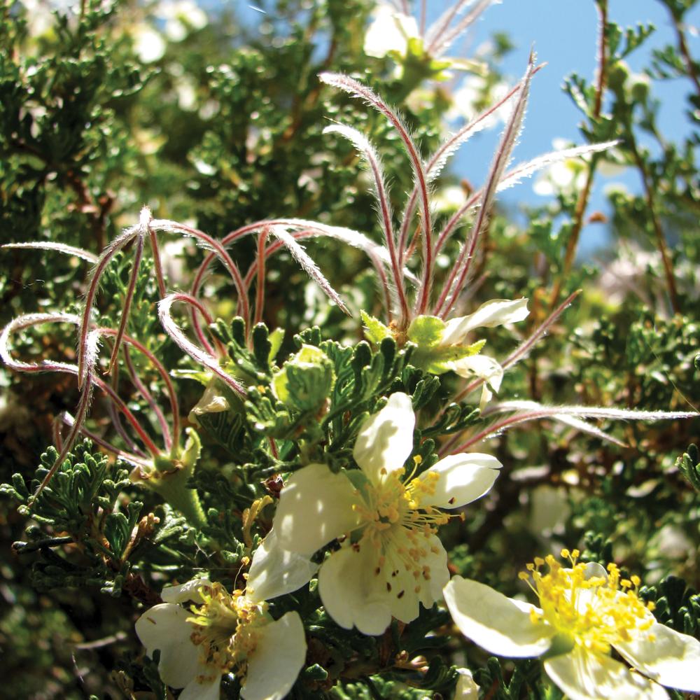 Bryce Flowers [RGB 3000 CS107 TL040].png