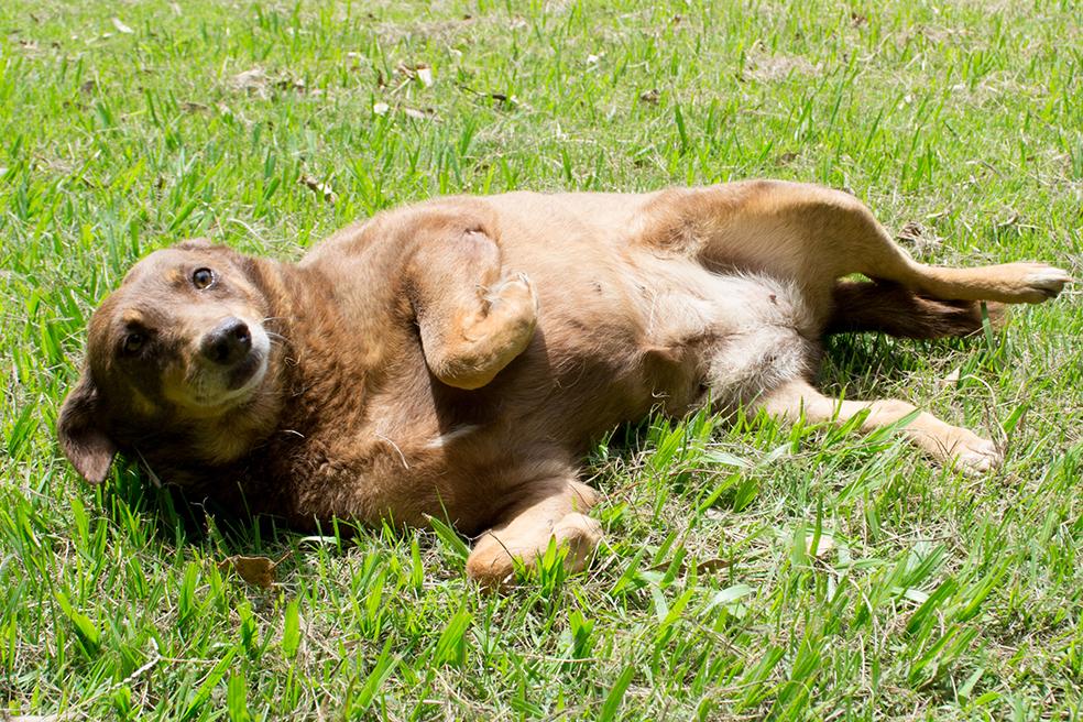 ZooLógica- Animais para adoção (33).jpg