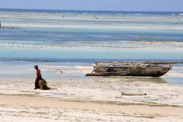 C.-TRAPP-Culture-dalgues-à-Zanzibar.jpg
