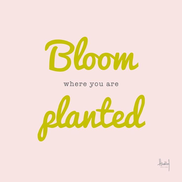 bloom-HBD_736