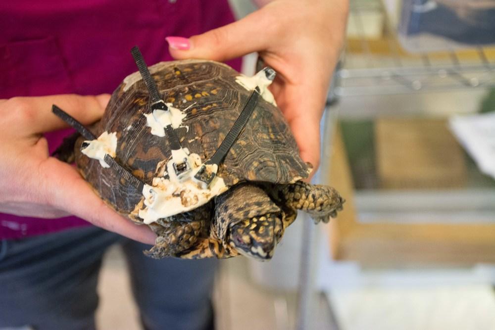 turtle shell repair