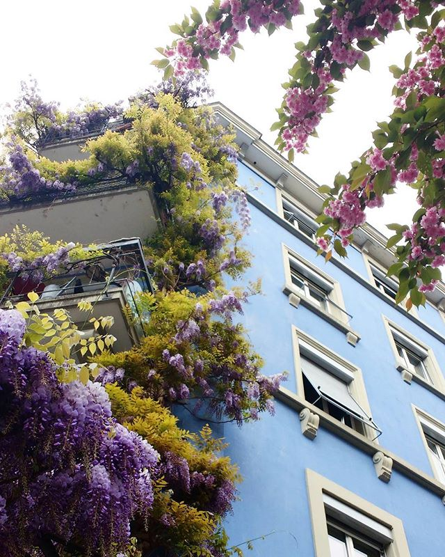 Strolling through Zurich. Most beautiful colors!  #Aesum #Spring #Zurich #Easter