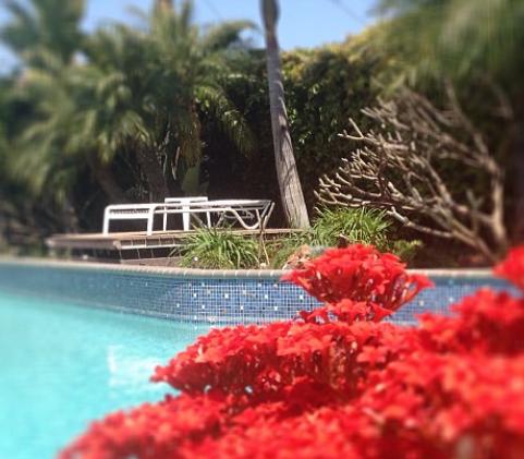 Pool.flowers.png