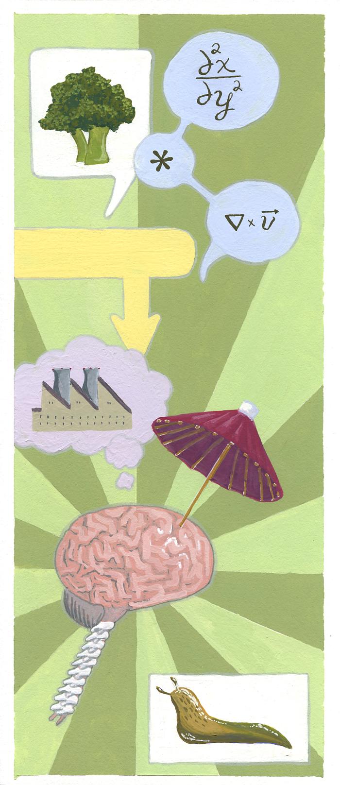 brain-boxes