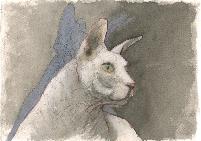 shadow-cat