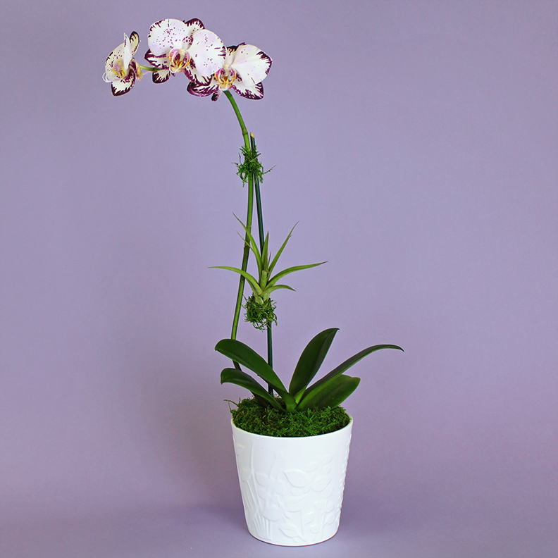 ORCHID OCCASION | $39