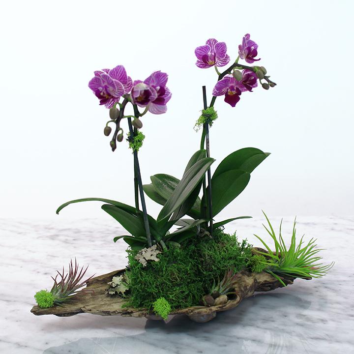 FB_OrchidsAirPlantsDriftwood_PRODUCT_NEW.jpg