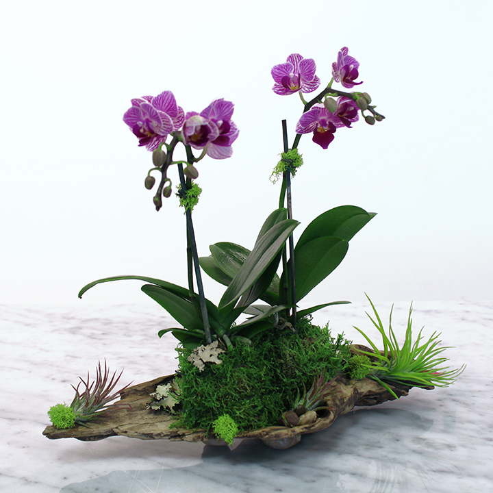 FB_OrchidsAirPlantsDriftwood_PRODUCT_NEW.jpg