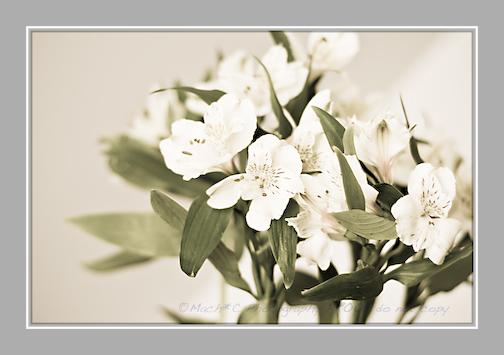 newdayflowers-11.jpg
