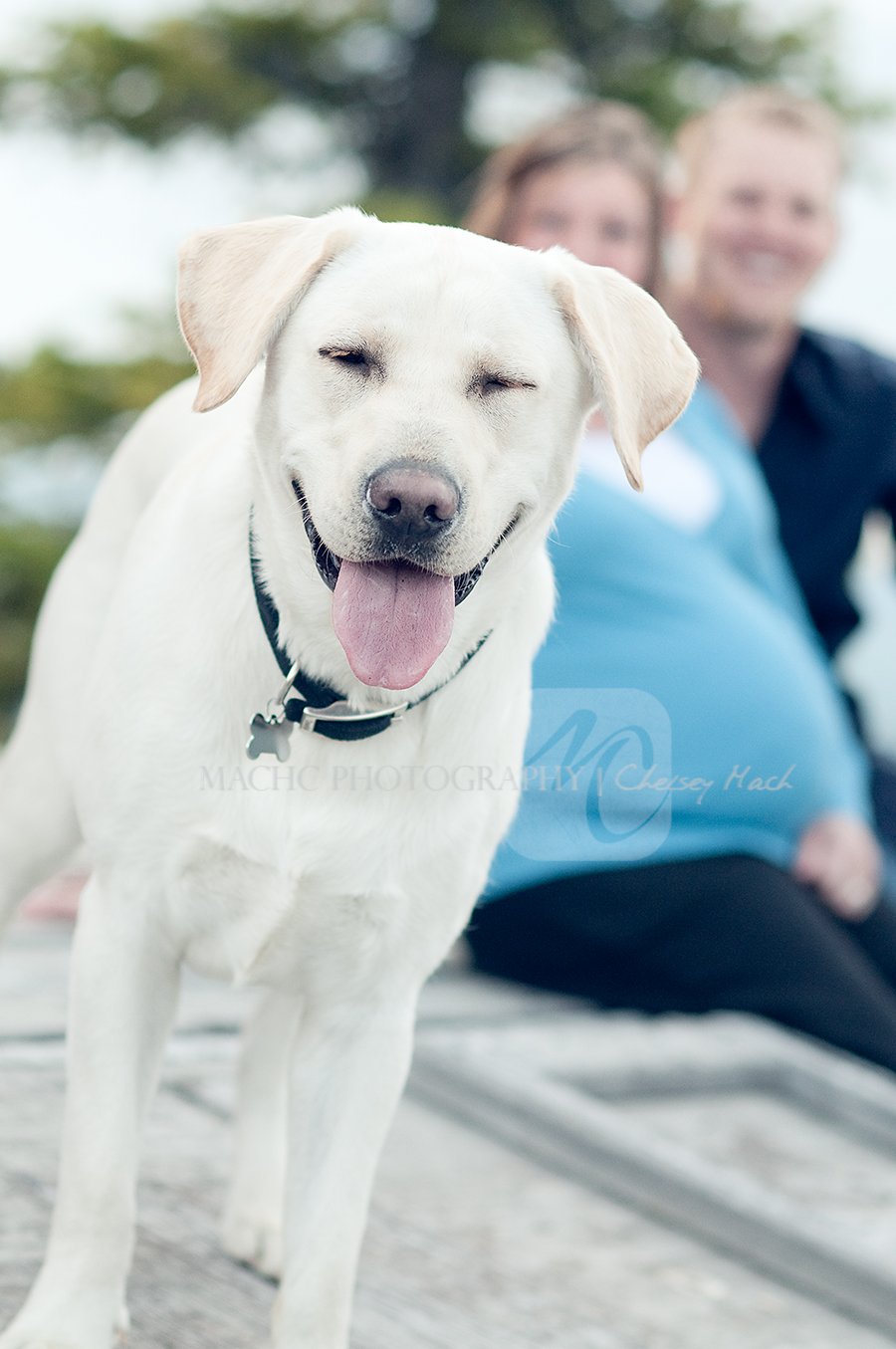 fairbanksmaternitydogphotographer-1
