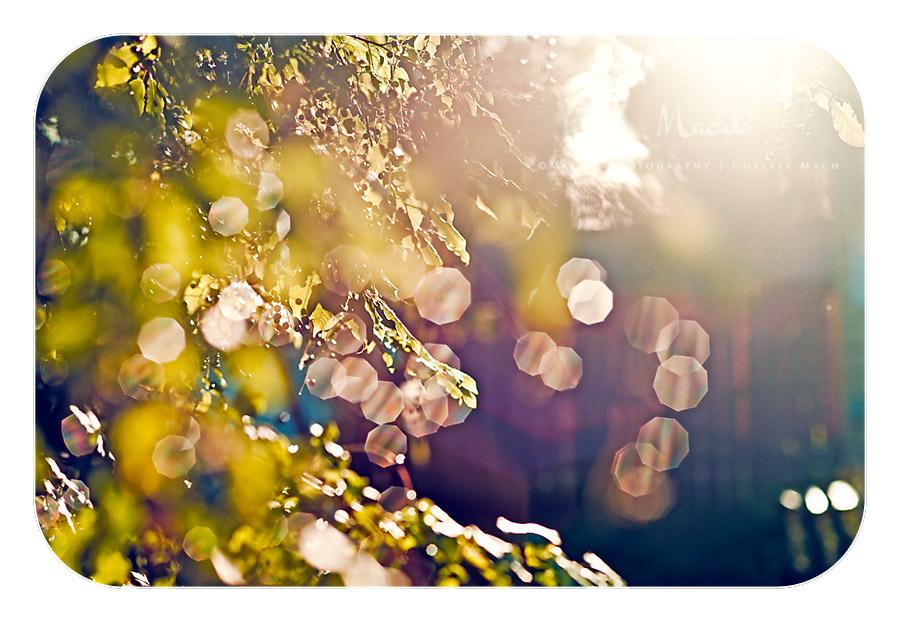 Seeing Light