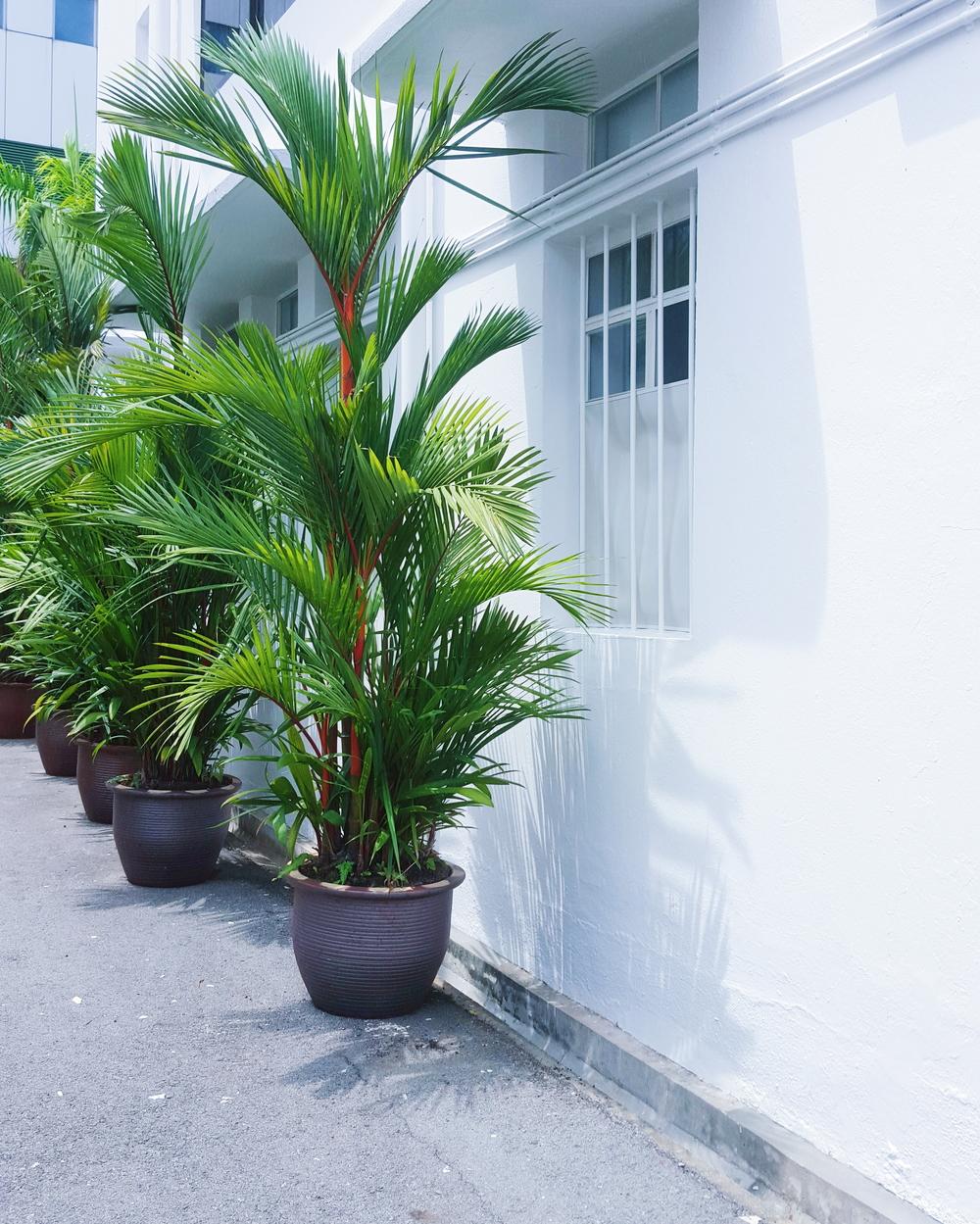 plants of TB.jpg