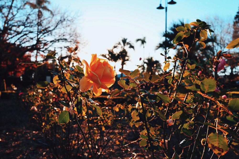 Bloom baby, bloom.