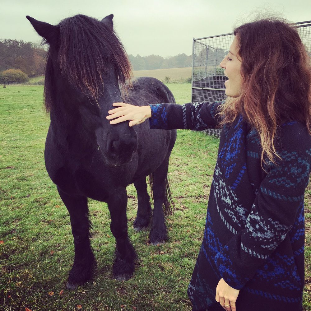 Equine Facilitated Coaching with the gorgeous Bow