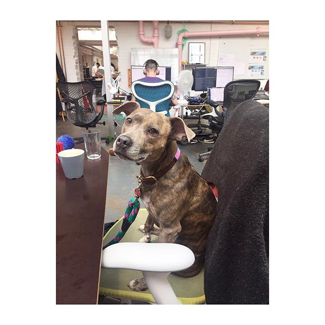 Working hard? Or hardly working? 💕🐶💕