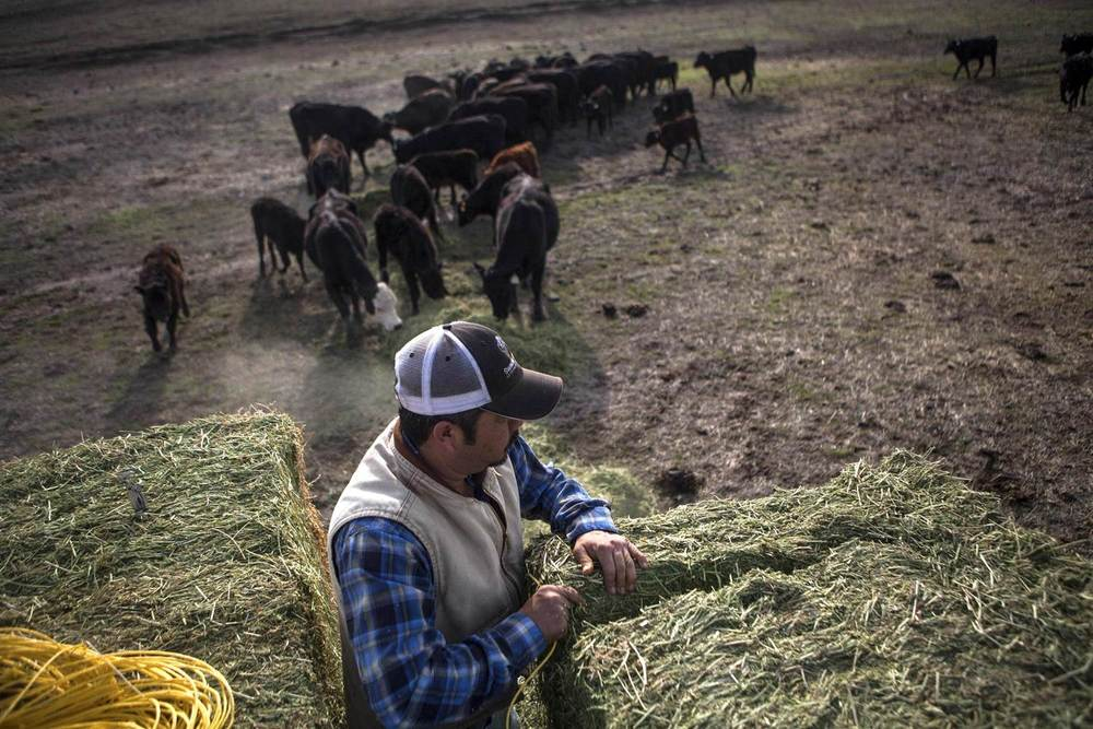 140221-calif-drought-cattle_6d7ab02f35f564be967876198dff964b.nbcnews-ux-2880-1000.jpg