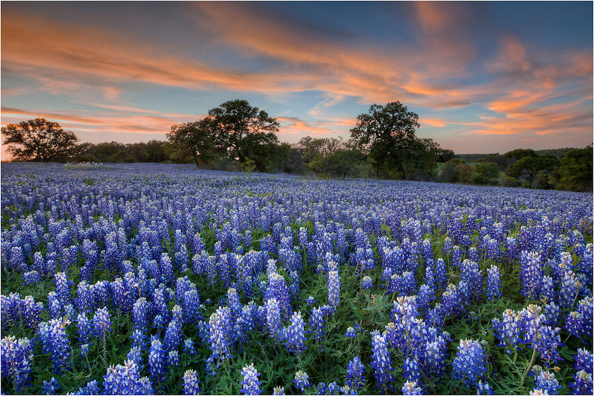 Texas-Bluebonnets-in-San-Saba-County-Spring-Evening-1.jpg