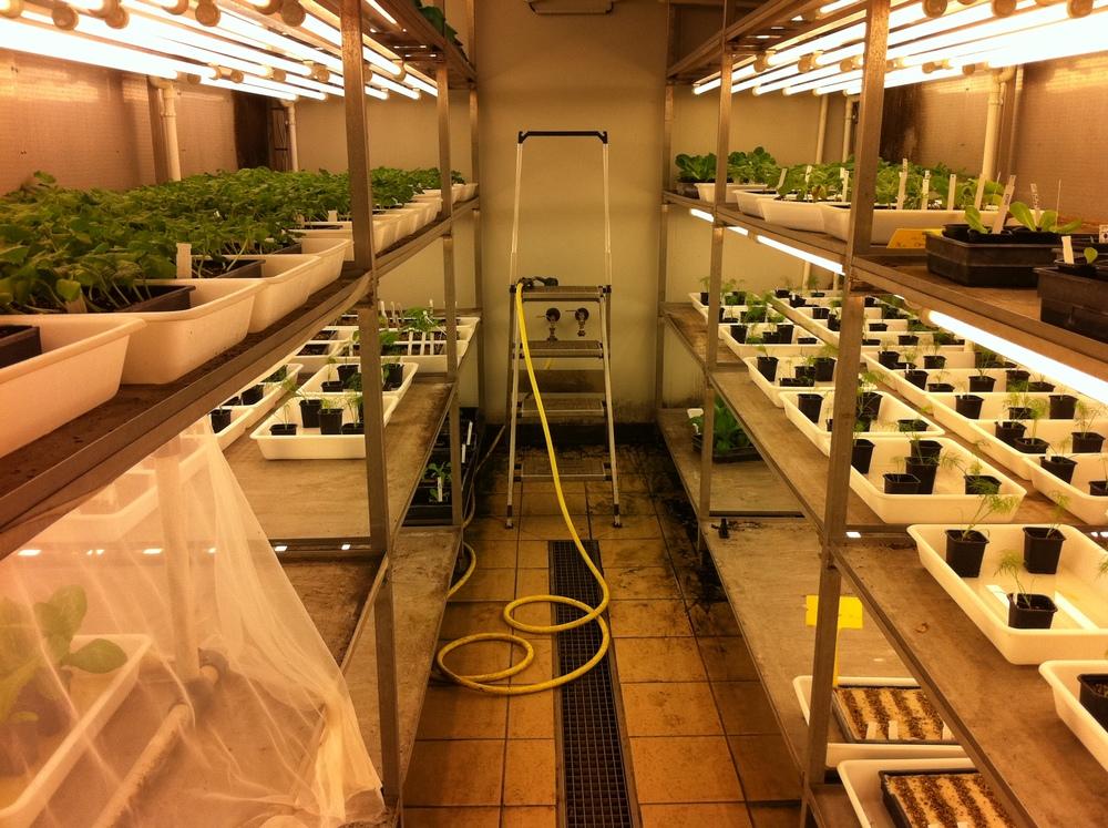 Jungpflanzenbetriebe