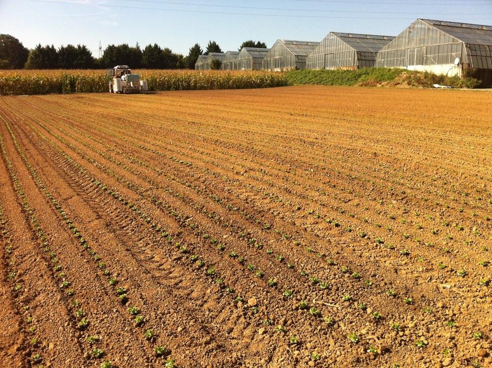 Landbau