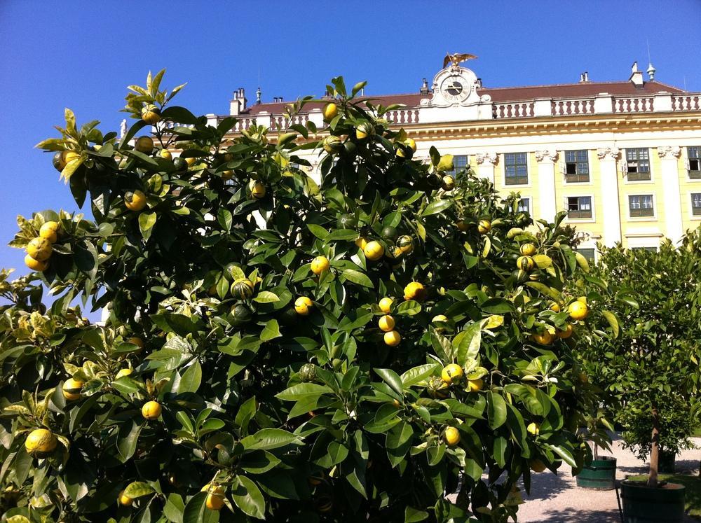Orangerien
