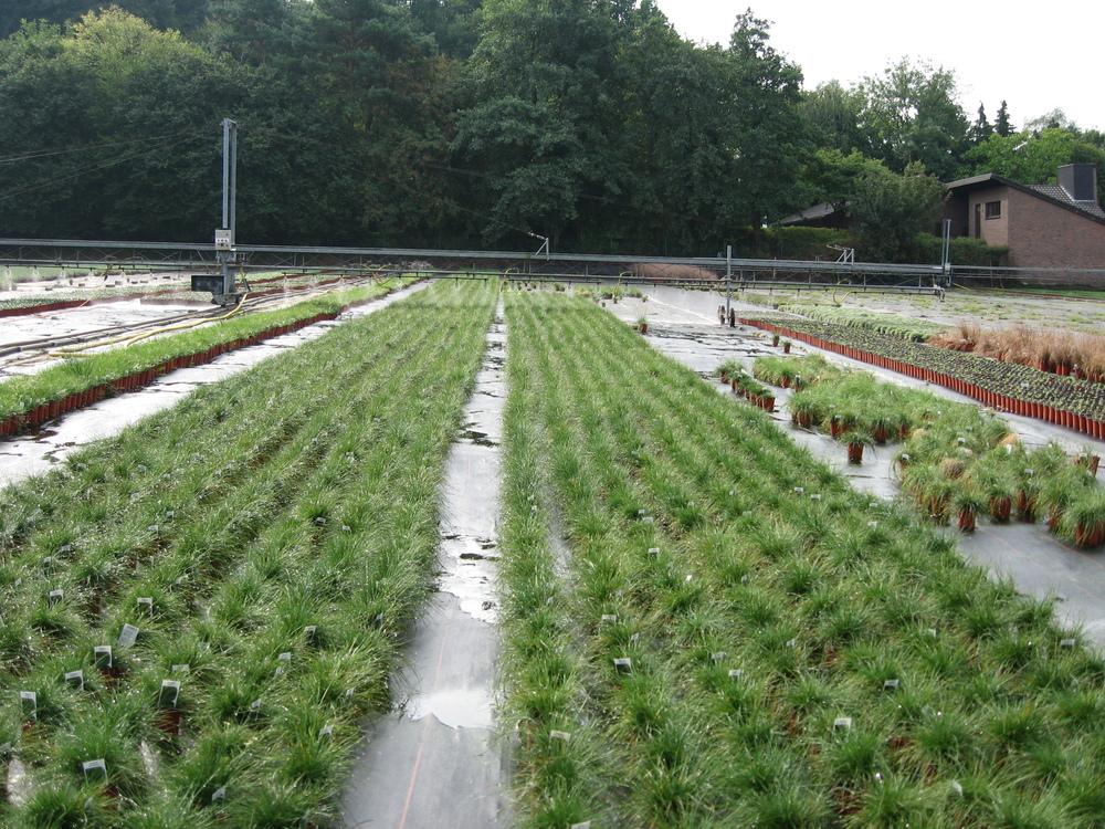 Zierpflanzenbetriebe