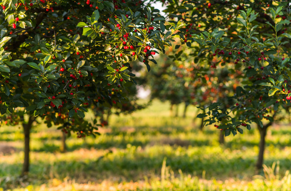 Bio Obstbau Äpfel Kirschen Beeren AMN Dünger BioVit.png