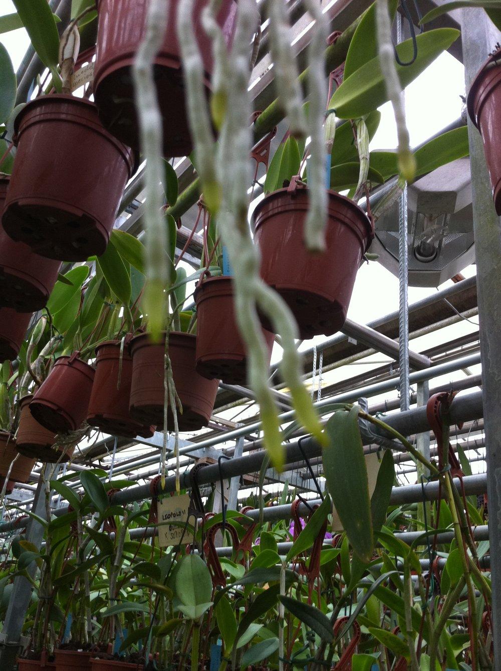 Zimmerpflanzen Bio Biodünger AMN.png
