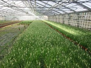 Praxisrezept  Bio-Zierpflanzen und Stauden