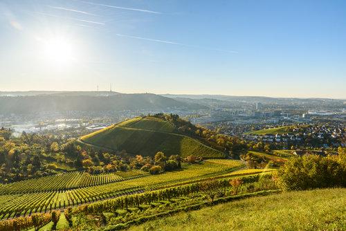 Praxisrezept  Weinbau