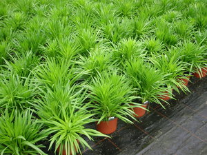 Praxisrezept  Universalrezept / Grundrezept Bio-Pflanzenbau