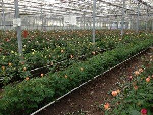 Schnittblumen und Rosen