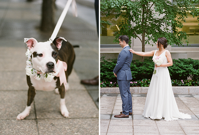 flower collar for dog on wedding day - Sarah Der Photography