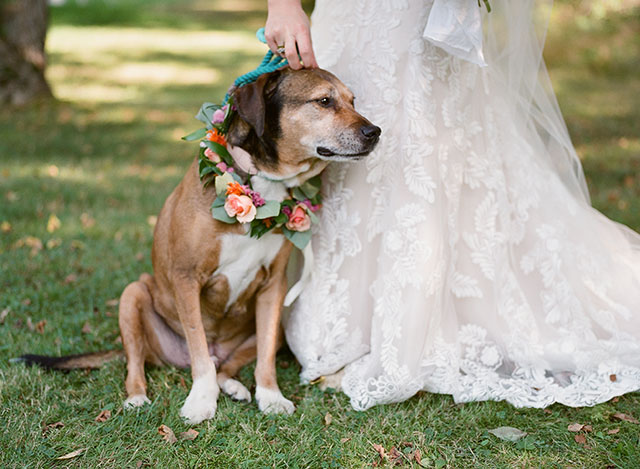 floral collar for dog in wedding - Sarah Der Photography