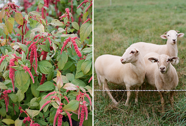 farm wedding details including sheep and homegrown florals - Sarah Der Photography