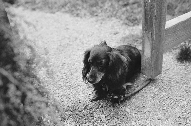 couple's dog watches over the activities - Sarah Der Photography