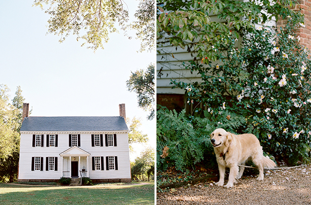 Boyhood home of Thomas Jefferson and resident canine golden retriever