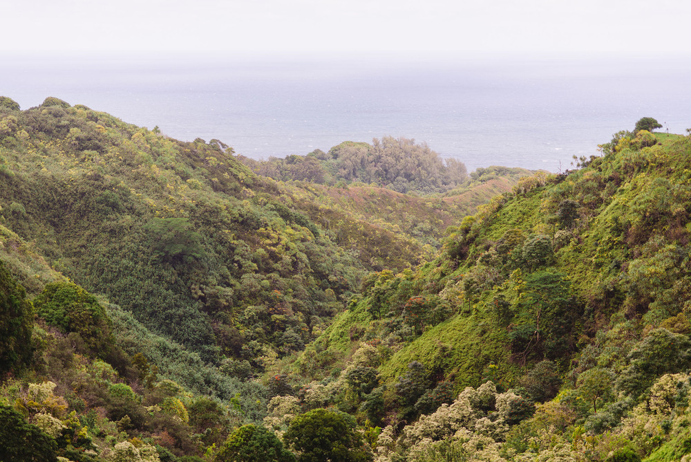 Maui_2014_00873.jpg