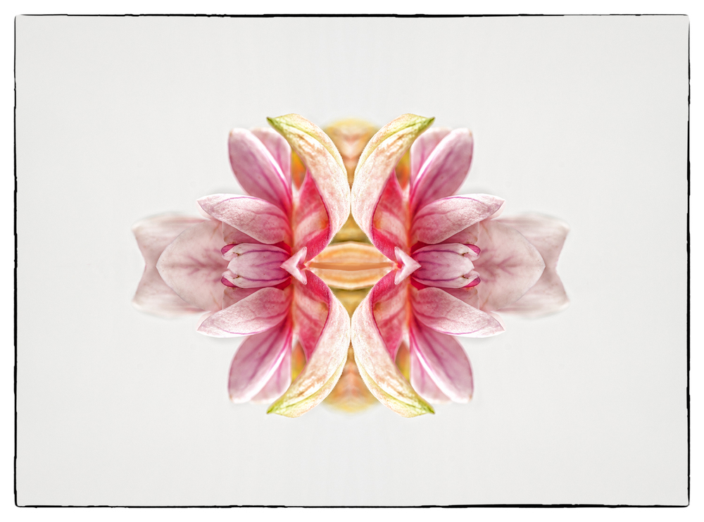 Pretty Fishy.jpg