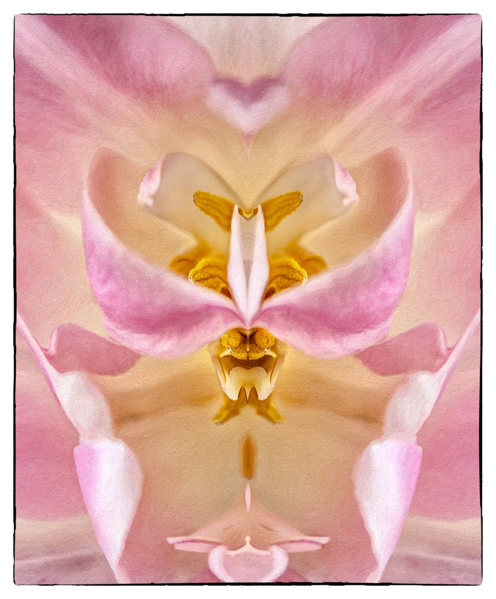 The Tulip  King.jpg