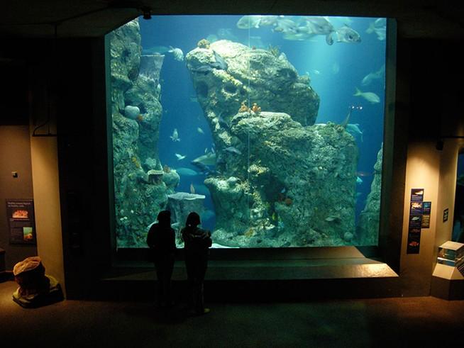 charleston aquarium.jpg