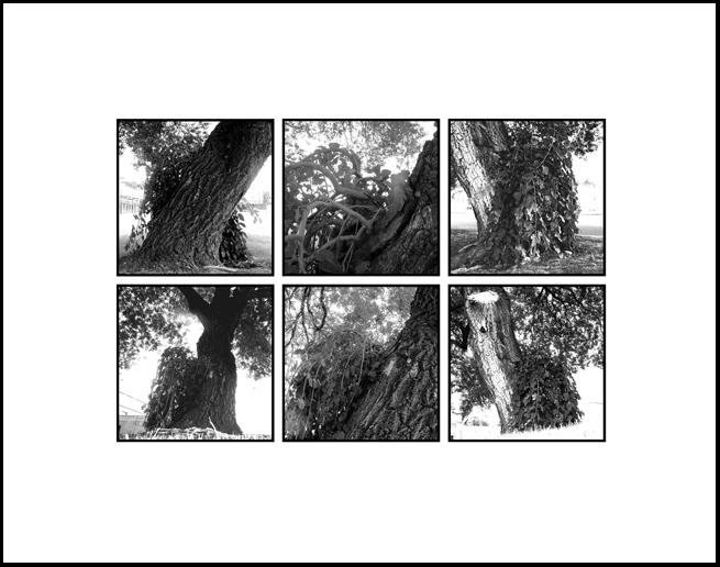 Wyman Tree Final.jpg